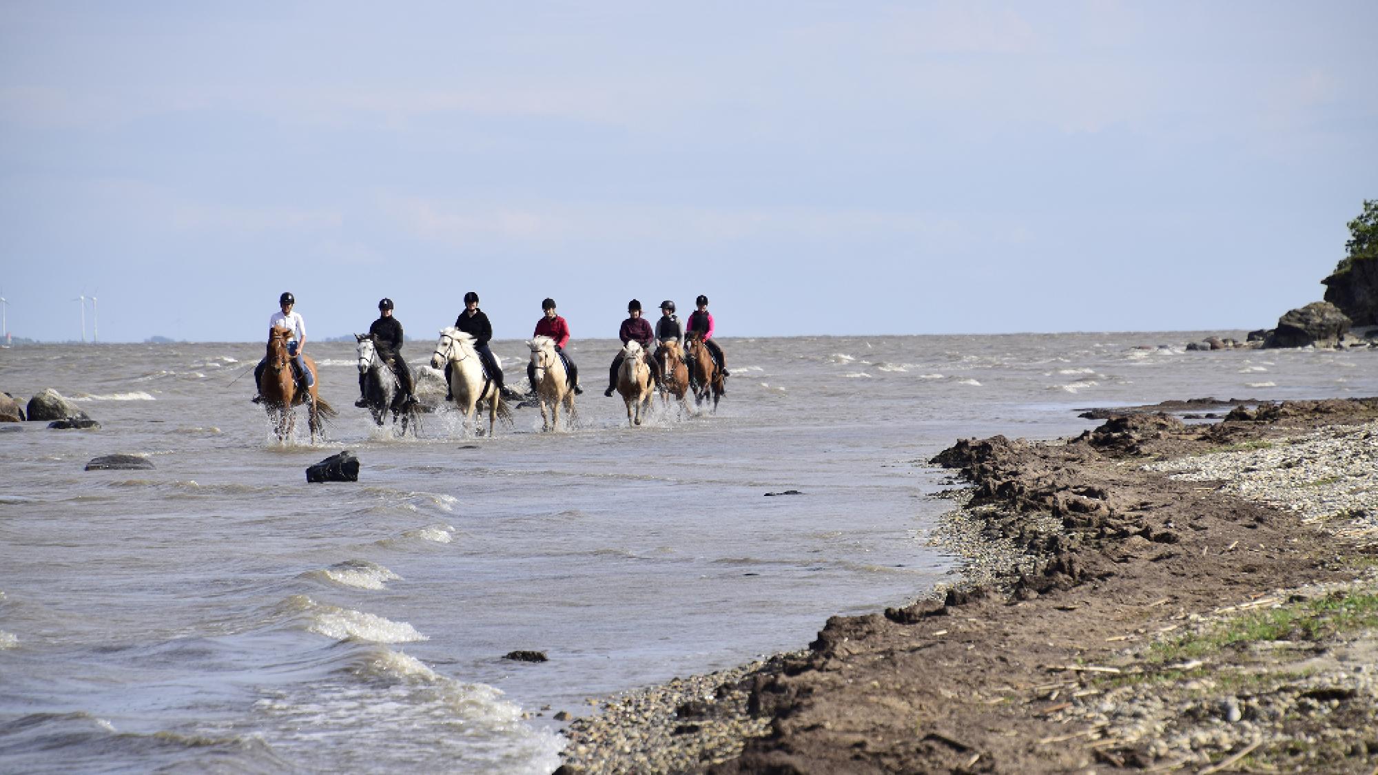 Ratsastusloma Virossa Tutustu Muhun Saarelle Sijaitsevaan